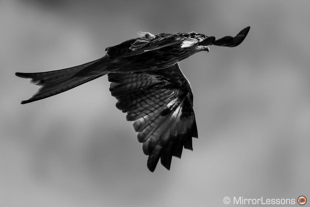 fuji birds in flight