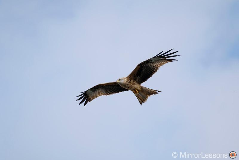 fuji x-pro2 birds in flight