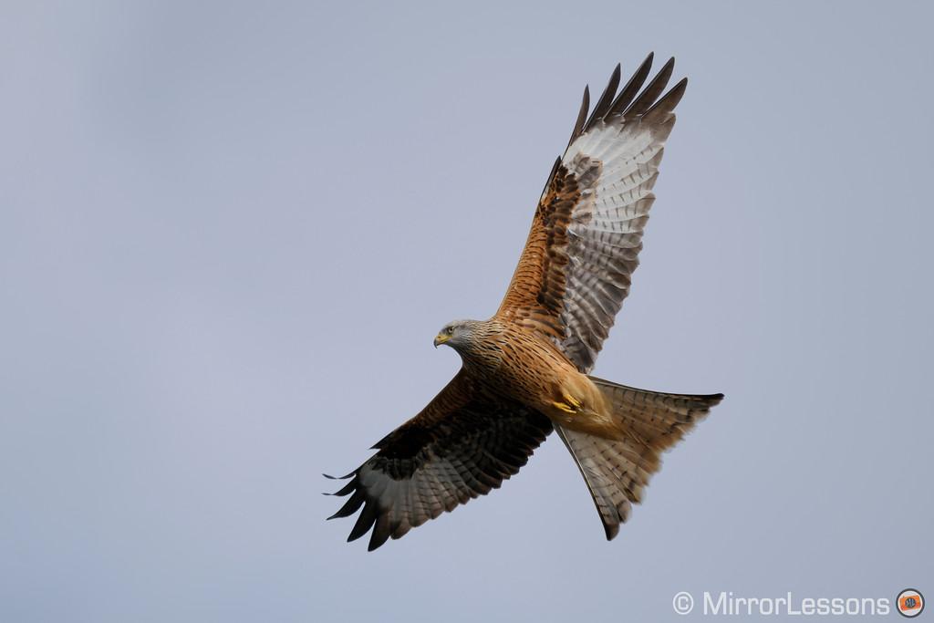 fuji x-pro2 ovf birds in flight