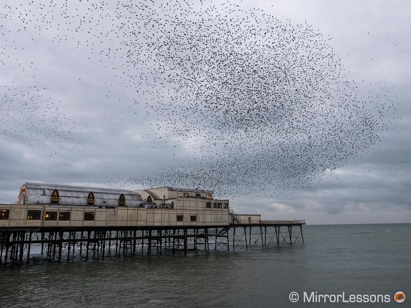 starlings murmuration aberystwyth